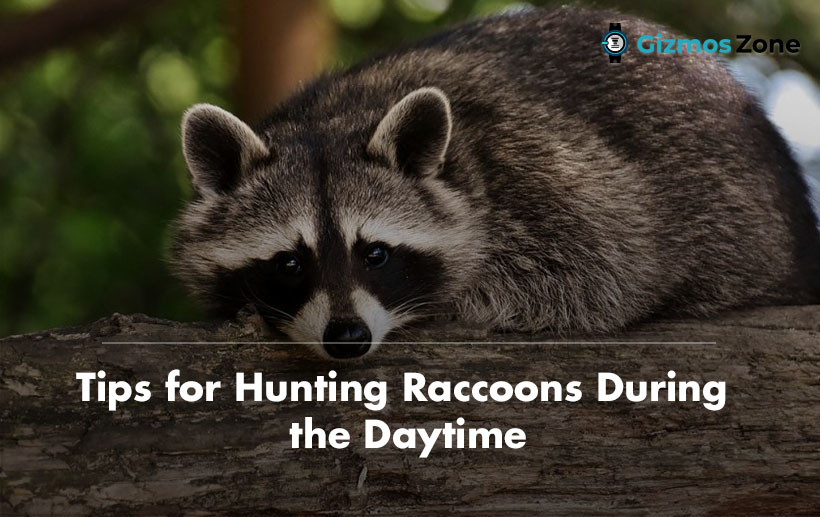 Tips for Hunting Raccoons During the Daytime